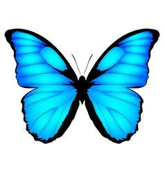 Blue butterfly exotic vector
