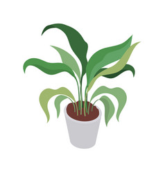 Houseplant with potted on white background vector