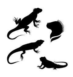 Lizard iguana set vector image