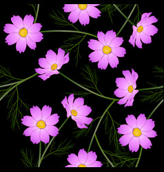 pink cosmos flower on black background vector image