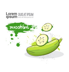 Zucchini hand drawn watercolor vegetable on white vector