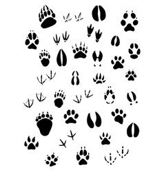 Animal footpints set vector image
