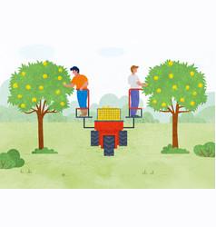 Autumn season people picking apples in garden vector