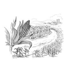 Cornfield grain stalk sketch vector