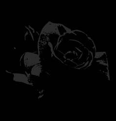 Dark velvet rose on a black background vector