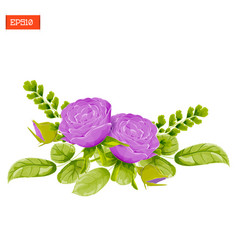 Floral composition purple rose flowers with vector