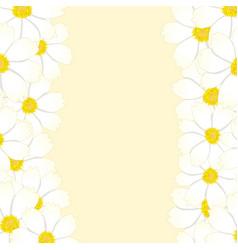 white cosmos flower border vector image