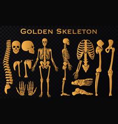 golden luxury human bones skeleton silhouette vector image