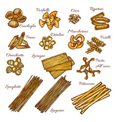pasta and spaghetti sketch set of italian macaroni vector image
