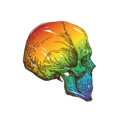 Skull drawing isolated vector