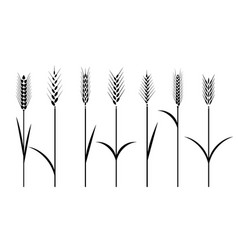 Wheat field cereals icon set with rice wheat vector