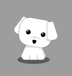 Cute maltese white puppy cartoon for design vector