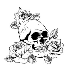on white background skull and roses vector image