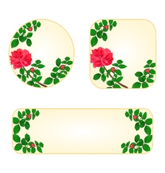 Rose banners and buttons with a flowers vector