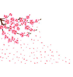 Sakura loses petals in the wind branches with vector