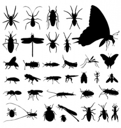set of insect vector image