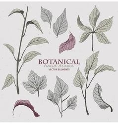 Botanical hand drawn elements vector image