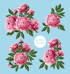 bouquet with pink peonies flowers vector image