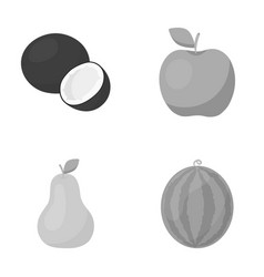 Coconut apple pear watermelonfruits set vector