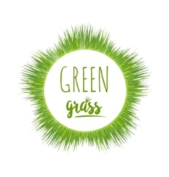 Realistic green grass lawn vector image vector image