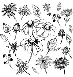 black and white set with floral elements vector image