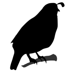 Black silhouette of quail vector