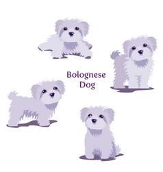 bolognese vector image
