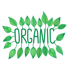 green organic sign in with growing leaves vector image