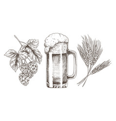 hop wheat and frothy beer in glossy glass goblet vector image