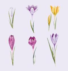 Watercolor floral crocus set vector