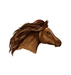 Sketched brown horse for equestrian design vector image vector image