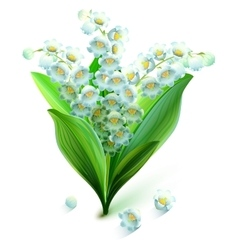 Flower lily valley bouquet lily of valley vector