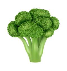 fresh broccoli icon realistic style vector image