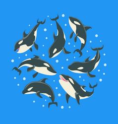 killer whales pattern round shape grampus vector image