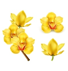 Orchid flowers icons vector