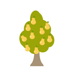 pear tree isolated garden wood with pears on vector image