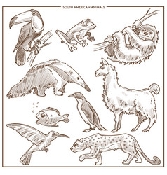 South american animals and birds sketch vector