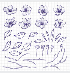 sketch style flowering cherry or apple tree vector image vector image