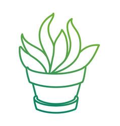 Desert plant in pot vector