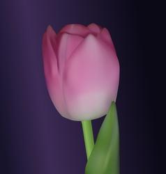 Realistic tulip vector image