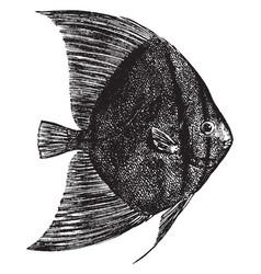 Sea bat vintage vector