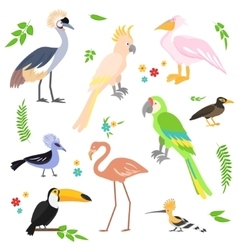 Colorful icons birds Tropical birds collection vector image vector image