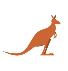 kangaroo isolated wallaby on white background vector image