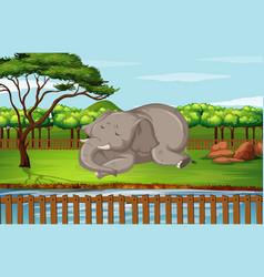 Scene with elephant in zoo vector