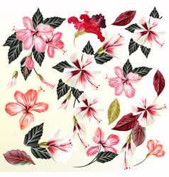 Beautiful collection of flowers vector