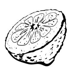 cartoon image of half melon vector image