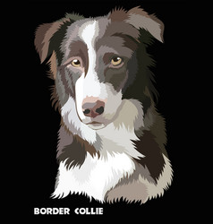 colored border collie vector image