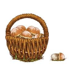 wicker basket full of orange cap boletus isolated vector image