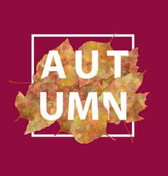 autumn banner typography vector image