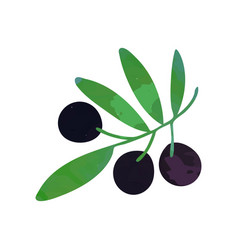 decorative branch with black ripe olives and green vector image